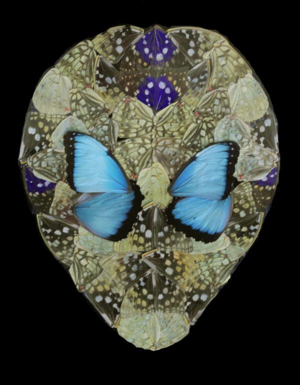 "Alien Entomology ""Marvin"""